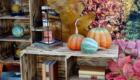 Kürbisse - Herbstliche Dekoration